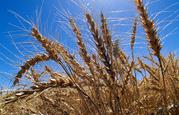 Regk. cемена трав и зерновых культур