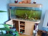 Аквариум 300 литров+ рыбки + прочие принадлежности