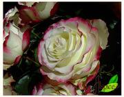 Из Эквадора - оптовые поставки свежесрезанных цветов.