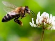 Продам пчелосемьи среднерусской,  башкирской пород