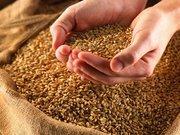 Продается фуражное зерно. ( Кормовое зерно.)