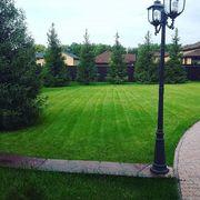 Рулонный газон от ландшафтного центра