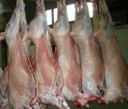 Гoвядина,  баранина,  мясо птицы,  куриная разделка оптом от 1, 5 тонны
